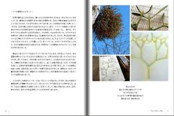 7つの植物のスピリット