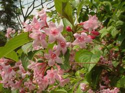 庭の花々 2010-06-12 21-18-12