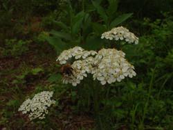 庭の花々 2010-06-27 22-13-34