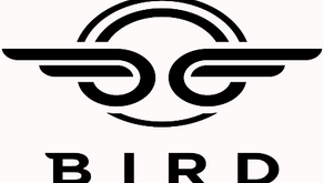 Bird(Everything you need to know)