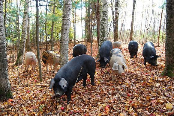 Whole Hog Deposit Pure Mountain Pork