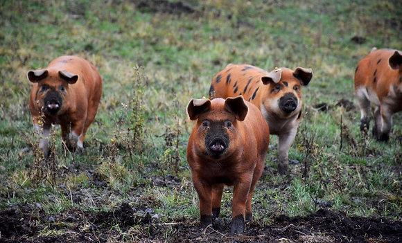 16 lb Cutter Ranch Pork Pack