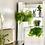Thumbnail: 3 Tier Hanging Plant Shelf