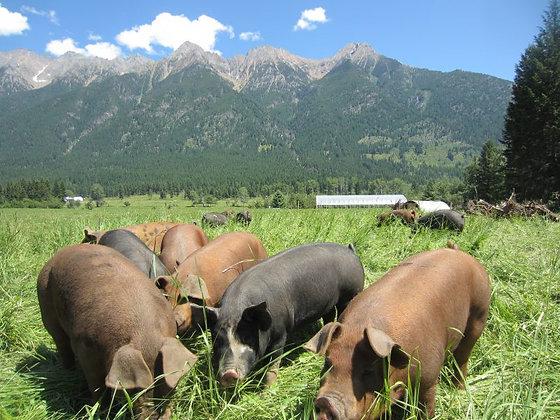 33 lb Cutter Ranch Pork Pack