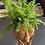 Thumbnail: Home Oniship Art Deco Brown Skin Girl Planter