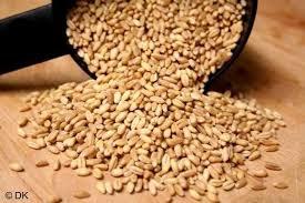 Organic Wheat Kernels *CA