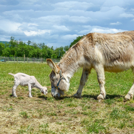 Donkey Left Behind By Family Has The Happiest Ending Ever