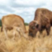 italo-helen-pasture.jpg