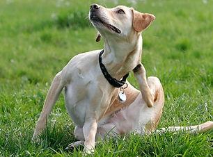 hunde-taegliche-fellpflege-kann-haarausf