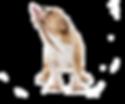 kisspng-australian-cattle-dog-pekapoo-ma