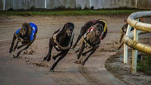greyhound-racing-3964594.jpg