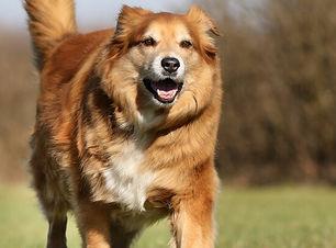 Ratgber_Hund-Ernährung-Übergewicht_1200x