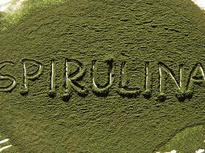 Spirulina für den Hund TOP oder FLOP