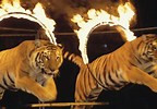 Animals in sports and entertainment
