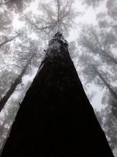 Mt Dandenong, VIC Australia