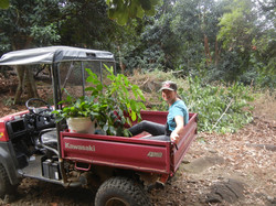 Getting the seedlings