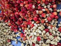 Pulped cherries