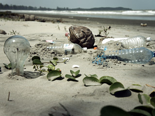 Pollution and its effects on the beach