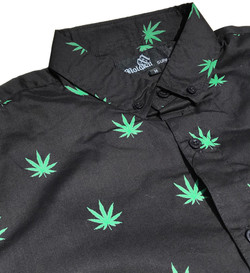 Cannabis black close up