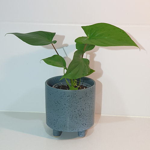 Navy Blue Speckle Pot