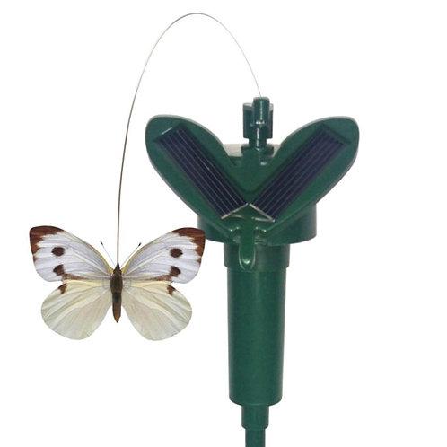 Solar Fluttering Butterfly