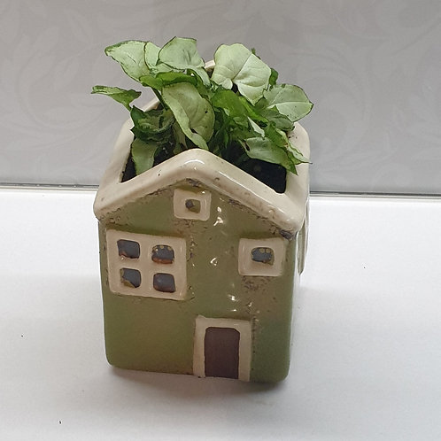 House Wall Planter