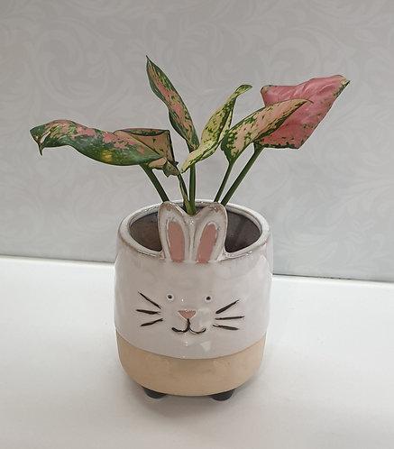 Rabbit Pink Ears