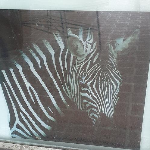 Zebra print Glass