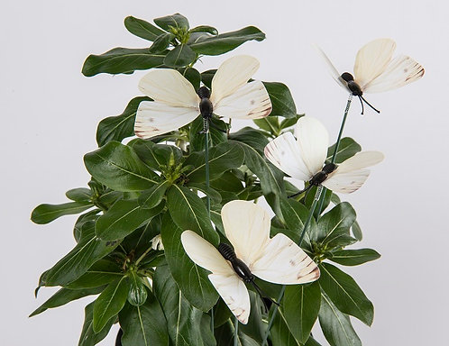 Cabbage Moth Butterlies -Pack of 3
