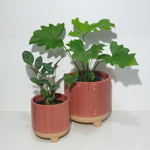 Terracotta Chevron pot