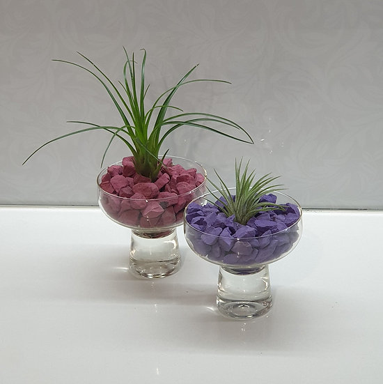 Air Plant + Rocks - pot not included.