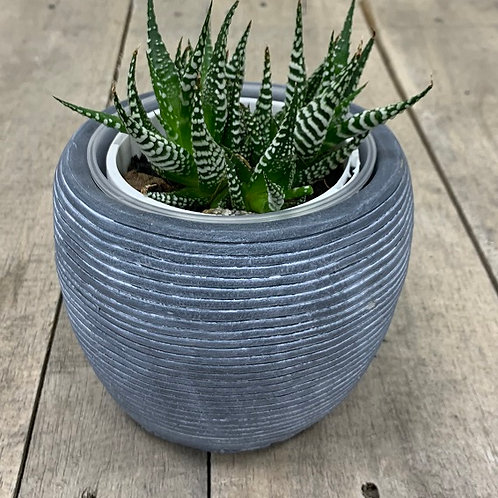 Grey Ribbed Pot 13cm