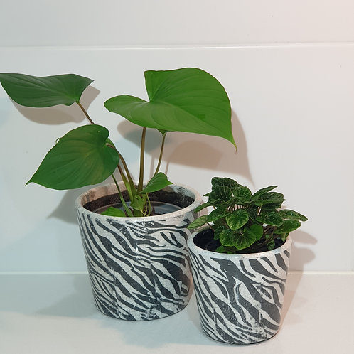 Zebra Print Pot
