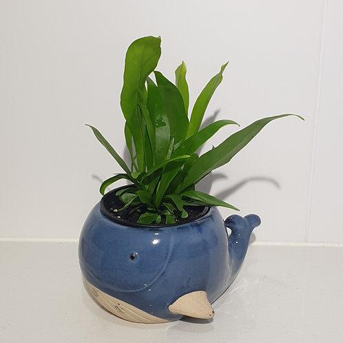 Blue Whale planter