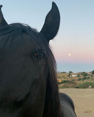 Black horse - Sirocco.jpg