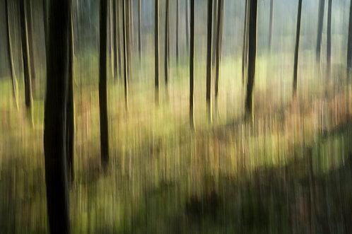 Dans la forêt #3