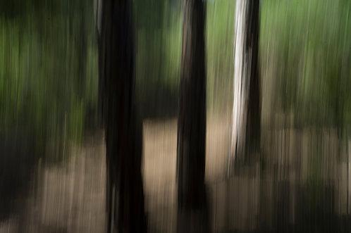 Dans la forêt #4