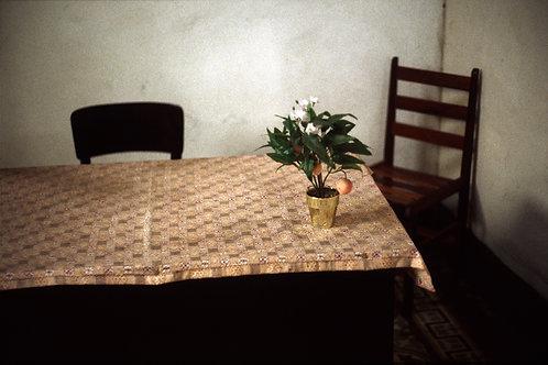 Le petit oranger, Bahia, Brésil - décembre 1999