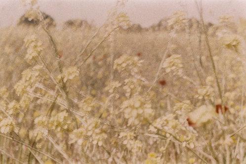 prairie, printemps , guillaume chaplot