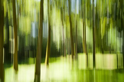 Dans la forêt #2