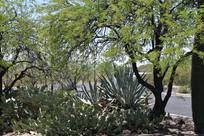 LCF Desert Scenery