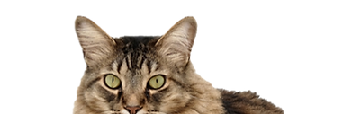 cropped_cat2.png