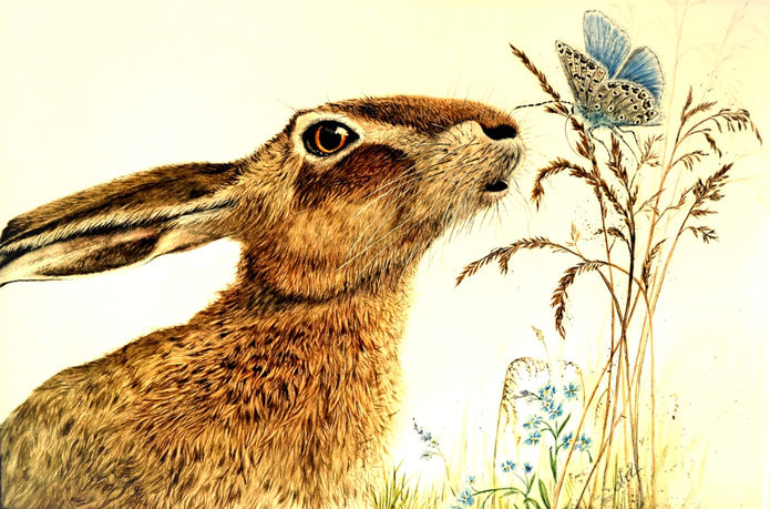 Wild Hare & Rare Butterfly