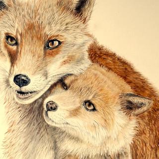 fox and cub.jpg