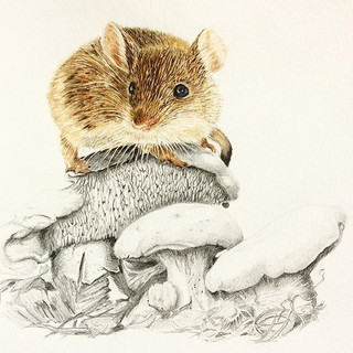 Mousey mushroom in pencil and Watercolou