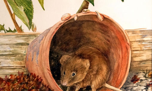 Sheltering Mouse