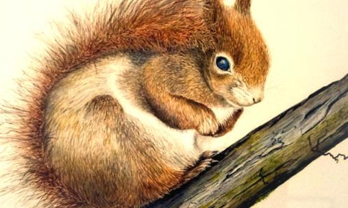 Huddled squirrel