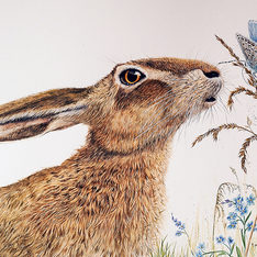Wild Hare and Rare Butterfly