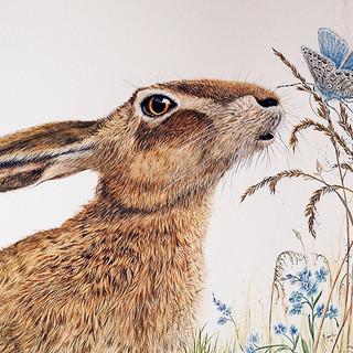 wild hare.jpg