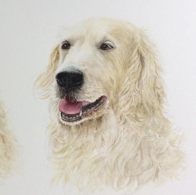 dog portrait 4.jpg